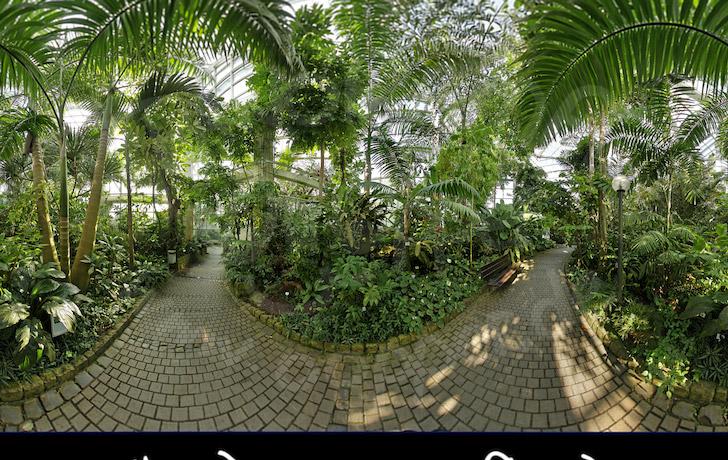 palmengarten tropicarium feuchte tropen regenwald. Black Bedroom Furniture Sets. Home Design Ideas